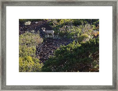 Framed Print featuring the photograph Capulon Buck by Charles Warren