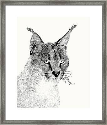 Caracal Wild Cat Portrait Framed Print