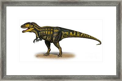 Carcharodontosaurus Iguidensis Framed Print