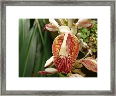 Cardamom Flower Framed Print by Mallika Rajasekaran