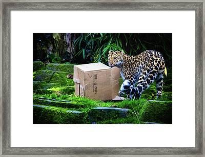 Cardboard Box Fun Framed Print