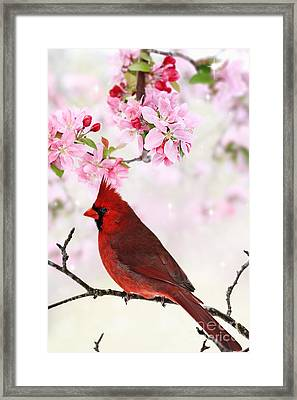 Cardinal Amid Spring Tree Blossoms Framed Print