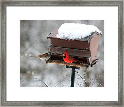 Cardinal And Sparrow At Feeder Framed Print