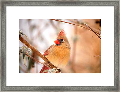 Cardinal Bird Female Framed Print