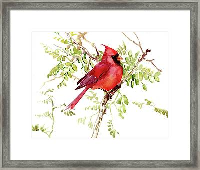 Cardinal Bird Framed Print