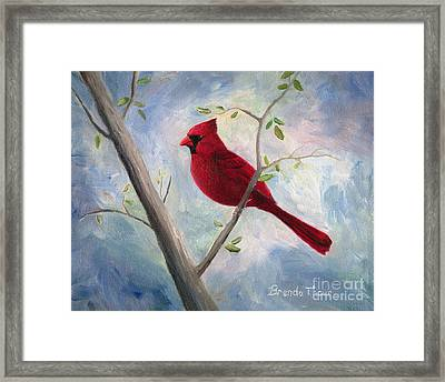 Cardinal Framed Print by Brenda Thour