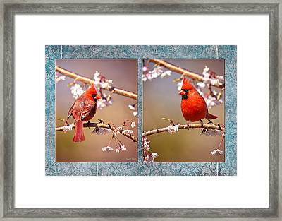 Cardinal Collage Framed Print by Angel Cher