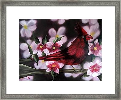 Cardinal Framed Print by Dianna Lewis