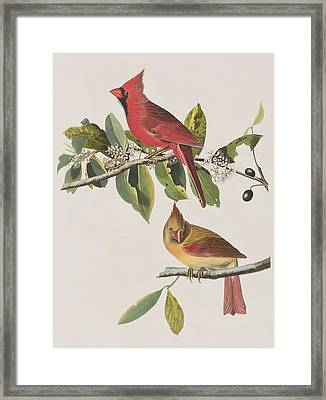 Cardinal Grosbeak Framed Print by John James Audubon