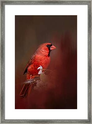Cardinal In Antique Red Framed Print