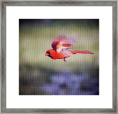 Cardinal In Flight- Paint Fx Framed Print