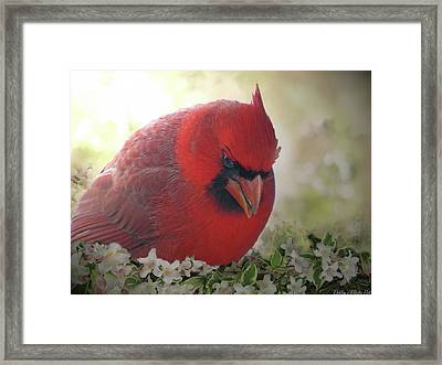 Framed Print featuring the photograph Cardinal In Flowers by Debbie Portwood