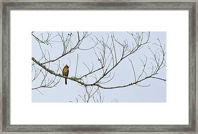 Cardinal In Tree Framed Print by Richard Rizzo
