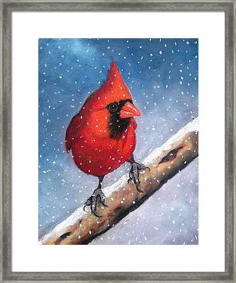 Cardinal In Winter Framed Print by Joyce Geleynse