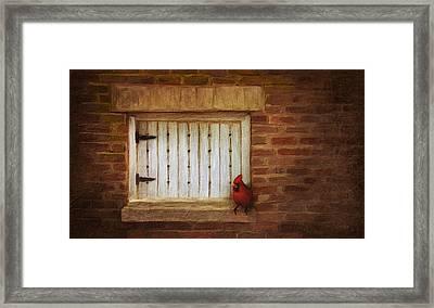 Cardinal On Brick Wall Window 5655 Framed Print