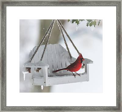 Cardinal On Swing In Snow Storm Framed Print by Terry DeLuco