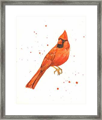 Cardinal Painting Framed Print by Alison Fennell