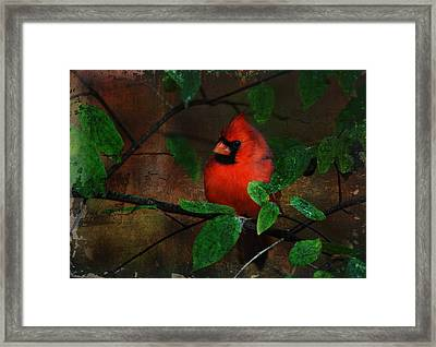 Cardinal Framed Print by Perry Van Munster