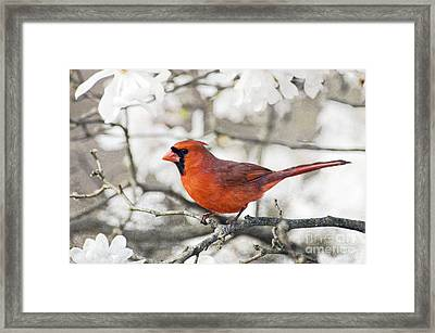 Framed Print featuring the photograph Cardinal Spring - D009909-a by Daniel Dempster