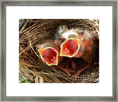 Cardinal Twins - Open Wide Framed Print by Al Powell Photography USA