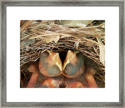 Cardinal Twins - Snugly Sleeping Framed Print by Al Powell Photography USA