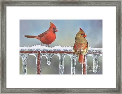 Cardinals And Icicles Framed Print