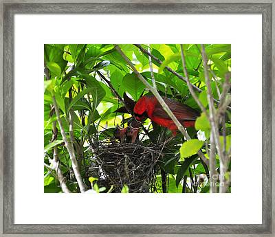 Cardinals Chowtime Framed Print by Al Powell Photography USA