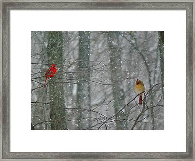 Cardinals In Snow Framed Print