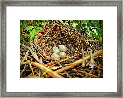 Framed Print featuring the photograph Brown Thrasher Nest And Eggs by Bellesouth Studio