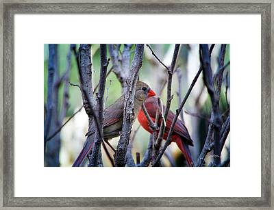 Cardinals Pair Framed Print