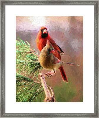 Cardinals2 Framed Print