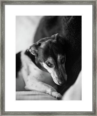 Cared For Framed Print by Mike Reid
