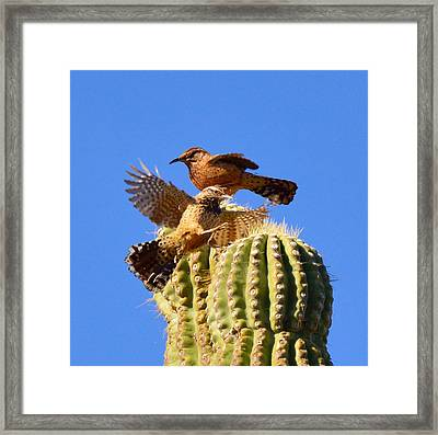 Careful Landing Framed Print by Marilyn Smith