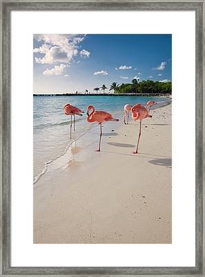 Caribbean Beach With Pink Flamingos Framed Print by George Oze
