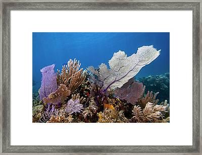 Caribbean Beauties Framed Print