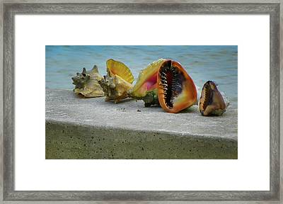 Framed Print featuring the photograph Caribbean Charisma by Karen Wiles