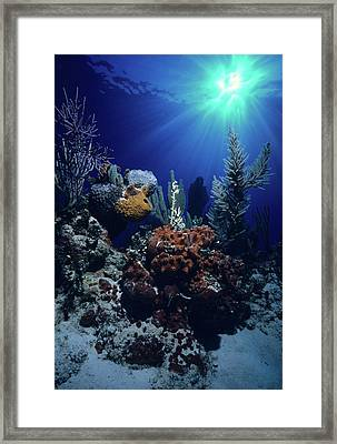 Caribbean Christmas   Framed Print