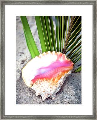 Caribbean Conch Framed Print by John Rizzuto