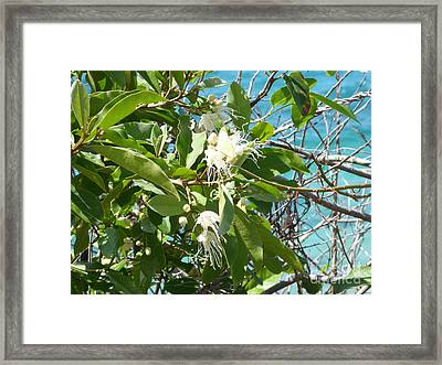 Caribbean Honeysuckle Framed Print