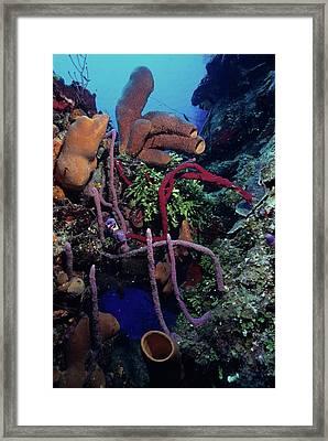 Caribbean Kaleidoscope  Framed Print