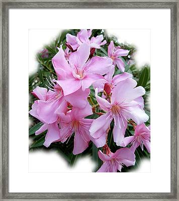 Framed Print featuring the photograph Caribbean Oleander by Marie Hicks