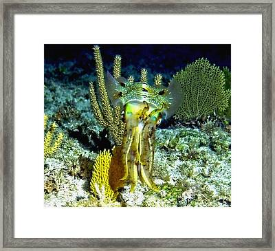 Caribbean Squid At Night - Alien Of The Deep Framed Print by Amy McDaniel