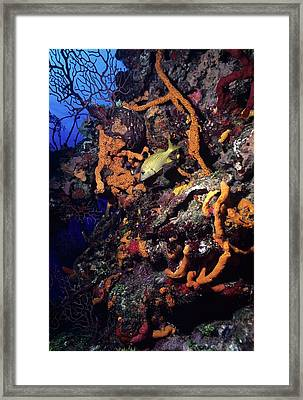 Caribbean Wall Dive Framed Print