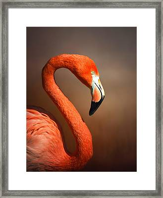 Caribean Flamingo Portrait Framed Print by Johan Swanepoel