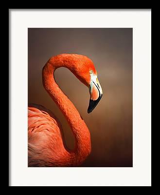 Big Birds Framed Prints