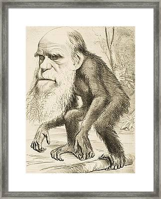 Caricature Of Charles Darwin Framed Print by English School