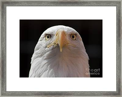 Carlisle Eagle Framed Print