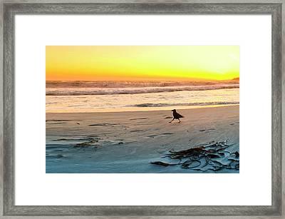 Carmel Crow. Framed Print by Sean Davey