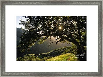 Carmel-valley-32-20 Framed Print