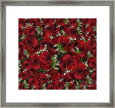 Carmine Roses Framed Print
